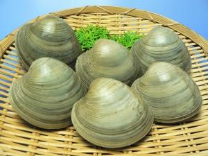 Cherry stone clam